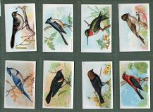 Collectable Trade cards set Useful Birds of America 1924 Church-Dwight